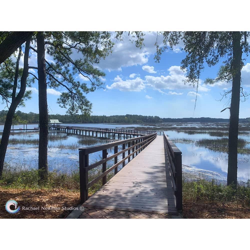 Riverbend Boardwalk by Rachael Newman